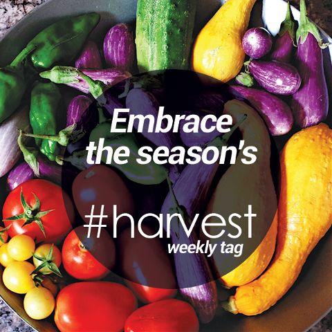 harvest photo tag