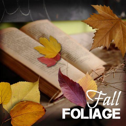 fall foliage clipart
