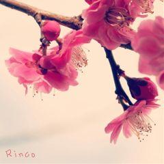cute flower nature winter spring