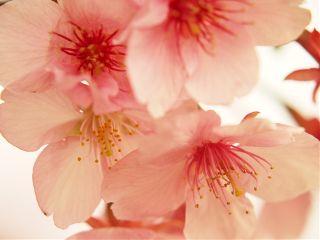 cute flower nature spring japan
