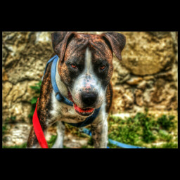 colorful dog hdr photography travel pets & animals