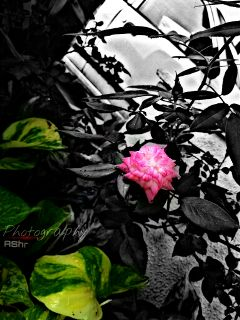 black & white colorful photography