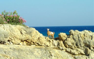 beach nature pets & animals photography summer