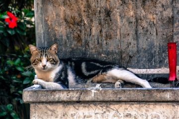 nature petsandanimals photography cat
