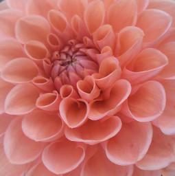 flower sun madebymelikealltheotherpicstoo
