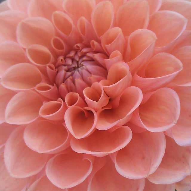 #flower #sun #madebymelikealltheotherpicstoo #:)