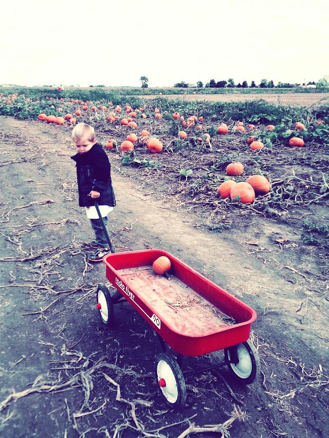 Pumpkin picking! #cute #nature #photography #harvest #fall #pumpkin