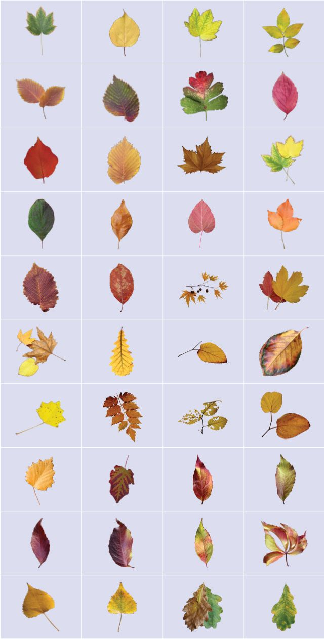 autumn leaves fall foliage clipart
