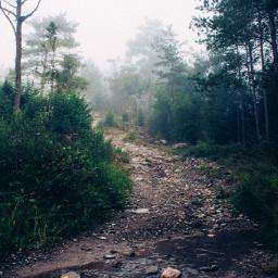 photography nature colorsplash winter fog