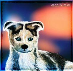 dcdog drawing digital art cute