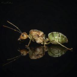 animals macro 50mm photography
