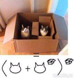 box cats fun
