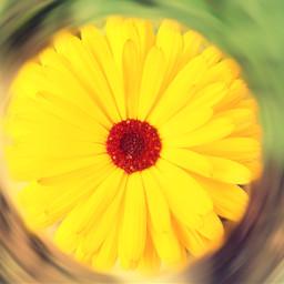 random_click yellow_flower hdr ts_photography