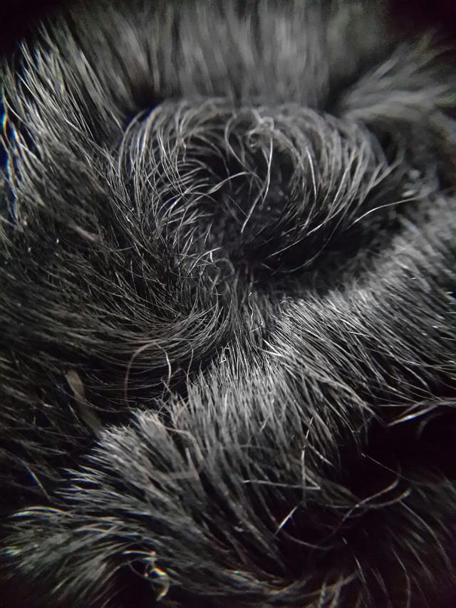 Furry thing