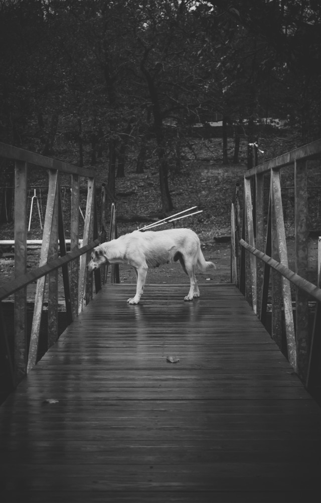 For the contest also! All votes are appreciated! :) #WAPsymmetry #photography #nature #blackandwhite #vintage #love