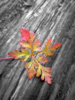 leaf blackandwhite nature fall