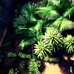 wapgreen